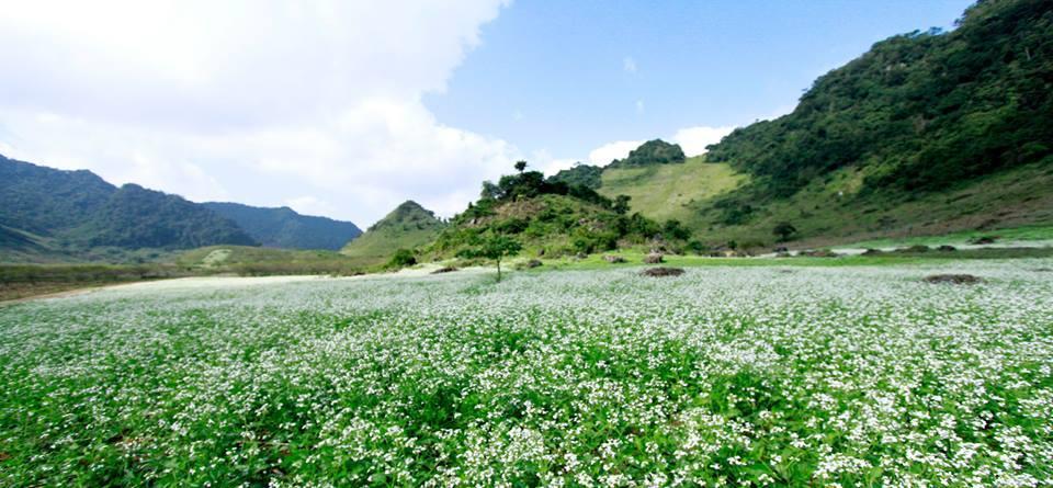 Tour 2N1D Hà Nội -  Ngắm hoa cải trắng Mộc Châu- Săn mây Tà Xùa